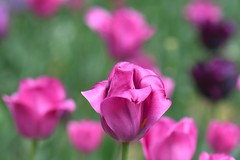 Wien, Stadtpark (liakada-web) Tags: at austria aut blume d7500 flower macro nikon nikond7500 österreich vienna wien wieniinnerestadt