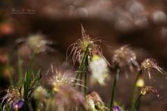 After the rain (THW-Berlin) Tags: rain regen tropfen plants pflanzen sony alpha6500 sigma135art