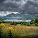 Lough Leane near Killarney