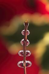 Festive Tree (joyhhs) Tags: macro water refraction christmas festive november 2018 flowers canon sigma photography flower relection bubble lensball on1