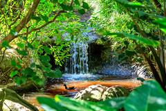 Moorhen in a pool..... (Johann (Still Me!)) Tags: waterfall landscape waterscape birdsofeden johanndejager ef70300mmf456isusm canoneos5dmarkiv duckbath duckpond moorhen commonmoorhen