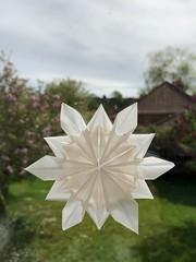 Christmas leftovers - snowflake. Designed by Dennis Walker (anuradhadeacon-varma) Tags: snowflake