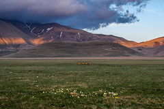| Spring flowers | (valerio.clementi) Tags: italy umbria castelluccio norcia flowers first field sunset clouds pentax k1 pentaxitalia pentaxians hill lastrays landscape italianlandscape umbrialandscape castellucciodinorcia pianogrande