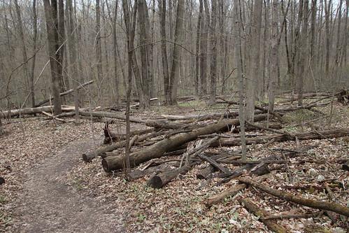 Scio Woods Preserve (Ann Arbor, Michigan) - April 27th, 2019