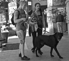 """Bear"" legs of Spring (tvdflickr) Tags: usa georgia marietta photobytomdriggers thomasdriggersphotography tvdimages photographybythomasdriggers street streetphotography nikon df nikondf 28300mm women woman lady dog canine sidewalk flowers sunflowers tattoos"