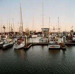 Dock (bingley0522) Tags: rolleicordvb xenar75mmf35 portra400 halfmoonbay dock boats eveninglight goldenhour california coastalcalifornia autaut