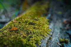 Moss on a Log (John Brighenti) Tags: outside outdoors nature park county montgomery seneca germantown gaithersburg woods forest trees hiking recreation spring april fun beauty natural creek stream valley trail dirt plants green sony alpha a7rii ilce7rm2 nex ilce emount femount bealpha shooter tamron zoom wide lens 2875mm glass daytime afternoon moss tamron2875
