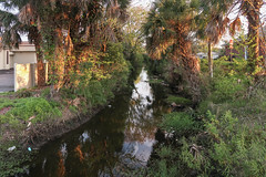 "An evening at the trashed-up creek ""Hopkins Creek"" in Neptune Beach, Florida, in early March. (Tim Kiser) Tags: trashycreek stjohnsriverdrainagebasin hopkinscreek jacksonvillelandscape northeastflorida saintjohnsriverdrainagebasin creeklitter 20190308 floridastateroad10 eveninglandscape northflorida neptunebeachflorida fence florida floridaa1a floridalandscape creek atlanticboulevard donotentersign riparian arecaceae riparianarea duvalcounty metrojacksonville jacksonvillemetropolitanarea floridastateroada1a neptunebeachlandscape evening riparianplants northernflorida trashedup palms riparianzone eveningsun landscape sunset sanpabloriverdrainagebasin hopkinscreeklandscape riverlandscape greaterjacksonville pablocreekwatershed sunsetlandscape northeasternflorida palmtrees florida10 litter img5982 streamlandscape saintjohnsriverwatershed pablocreekdrainagebasin neptunebeach march river sanpabloriverwatershed trashystream duvalcountyflorida stjohnsriverwatershed stream creeklandscape 2019 march2019 riverinelandscape"
