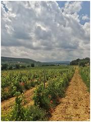 Vinyes del Penedès. (Xena,s) Tags: viñas viñedos vinevards landscape paisatges paisajes camp campo naturaleza natura nature nubes núvols clouds anoia penedés