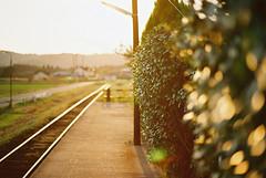 Stay Gold (ta-ka.Mk2) Tags: film filmphotography filmcamera nikon f801s kodakproimage100 station sunset 夕暮 無人駅 フィルム