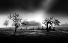 Callobre (Noel F.) Tags: sony iii callobre estrada galiza galicia neboa fog mist a7iii 24 14 gm