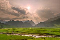 _MG_2210.0809.QL32.Than Uyên.Lai Châu. (hoanglongphoto) Tags: asia asian vietnam northvietnam northwestvietnam northernvietnam landscape scenery vietnamlandscape vietnamscenery afternoon sun sunny sunnyafternoon sunlight ricefields mountain flanksmountain ray rays sunray cloud canon canoneos5dmarkii canonef2470mmf28lusm tâybắc laichâu ql32 thanuyên phongcảnh buổichiều bầutrời mây nắngchiều mặttrời núi sườnnúi cảnhđồng ruộnglúa fields sky