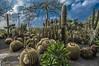Giardini Ravino (Nunzio Pascale) Tags: succulent grusoni cactus piantegrasse giardiniravino grusone saguaro garden ravinosgardens d90nikon nikkor18200 forio