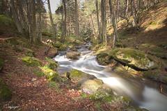Dejate llevar y deja vibrar a los sentidos...119/365 (cienfuegos84) Tags: forest bosque naturaleza river nature río stone stones piedra tree árbol
