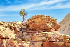 A Tree in Grand Wash (SammCox) Tags: capitolreef grandwash rockformation sky tree utah