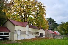 Orton Bradley Park farm buildings (Kiwi Jono) Tags: orton bradley park farm buildings outdoor grass tree autumn limited smcpfa31f18