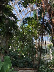 Botanic Garden Tropics (rachelkidwell93) Tags: nature natural plants growing plant bud bloom blooming budding summer spring botanic garden flora washington dc green sun sunny window glass tall up look perspective palm trees tree tropical warm tropics blue sky trunk exotic fern public national vines flower blossom color vibrant virginia explore architecture texture zoom focus arrangement floral
