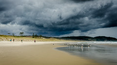 About to get very wet (Stefan Marks) Tags: osnz ornithologicalsocietynewzealand tasmansea animal beach bird blackbackedgull bush cloud gull nature ocean outdoor people plant rain sand sky tree wave weather leigh northisland newzealand