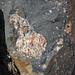 Clast-rich impact pseudotachylite (Sudbury Breccia, Paleoproterozoic, 1.85 Ga; Windy Lake Northwest roadcut, Sudbury Impact Structure, Ontario, Canada) 31