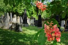 Jüdischer Friedhof Mainz (nordelch61) Tags: deutschland rheinlandpfalz mainz friedhof jüdisch juden jewish cementery grab grabstätte grabsteine grave graveyard grün frühling
