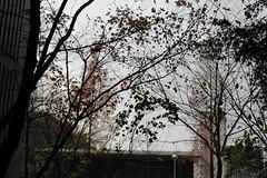 1540/1722 (june1777) Tags: snap street seoul bokeh kyocera contax n digital ndigital nd carl zeiss planar nplanar 50mm f14 25