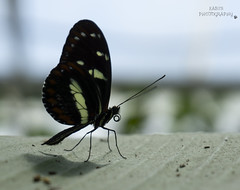 Butterfly (Fabi's Photography) Tags: