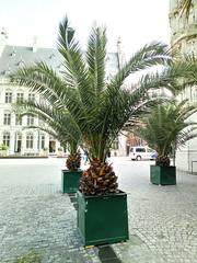 pineapples (House Of Secrets Incorporated) Tags: statue louvain belgium leuven ananas pineapple