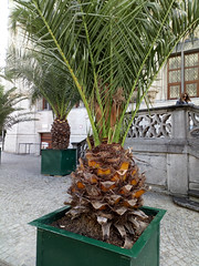 Photo of the day: 27.4.2019 (House Of Secrets Incorporated) Tags: statue louvain belgium leuven ananas pineapple photooftheday photooftheday2019 aphotoaday2019 dailyphoto dailyphoto2019 dailyphotography dailyphotography2019 dailyphotograph