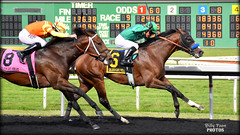 2019 California Derby - Golden Gate Fields (billypoonphotos) Tags: kingly gutierrez mario baffert bob california oakland tapeta golden gate fields berkeley jockey horse racing thoroughbred dirt track photo picture photography photographer billypoon billypoonphotos nikon d5500 18140mm nikkor news stretch win finish synthetic race 18140 mm derby 2019 stakes goldrushweekend visitant