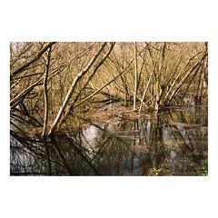 P160277438-22 (csinnbeck) Tags: analog film contax rx kodak portra 160 denmark 3528 35mm zeiss t 2019 aarhus lake spring