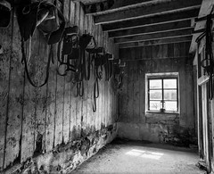 Tyneham Stables (Adam Clark Photography) Tags: abandoned nature urban decay horses stables equestrian bw blackandwhite film filmphoto filter black white tyneham window old bronica gs1