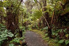 Kilauea Iki Trail, Hawaii Volcanoes National Park, Hawaii (Roger Gerbig) Tags: kilaueaiki hawaiivolcanoesnationalpark kilauea volcano hawaii bigisland island rogergerbig canoneos5dmarkii canonef24105mmf4lisusm 2965 kilaueaikitrail