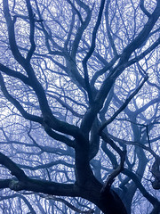 BRY_20090108_CIMG1162_edited-1_ (stephenbryan825) Tags: merseyside woolton art branches dramaticlight fog foggy haze leaves mist moody morning trees trunks