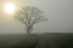 Foggy Morning1 (Franck gallery) Tags: bourgogneburgundy bourgogne burgundy fog morning brouillard matin d90 route road coutryland campagne landscape paysage sun soleil tree arbre