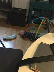 """Sam Tries to Crawl • <a style=""""font-size:0.8em;"""" href=""""http://www.flickr.com/photos/109120354@N07/32808852207/"""" target=""""_blank"""">View on Flickr</a>"""