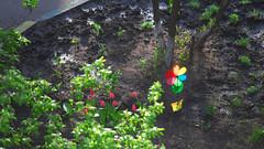 IMG_6576 (Mike Pechyonkin) Tags: 2019 moscow москва tree дерево tulip тюльпан flower цветок pinwheel вертушка пропеллер мельница