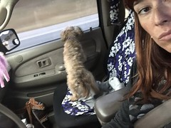 119/365 (boxbabe86) Tags: animal dog monday april iphone8plus selfie driving chewy 365days day119