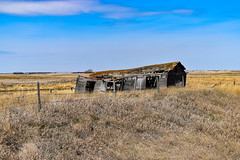 Abandoned barn (darletts56) Tags: sky blue cloud clouds field fields country fence wire post posts grass dead gold golden grey abandoned abandon barn decay falling apart holes moss collapsesaskatchewan canada prairie old tree trees farm farms