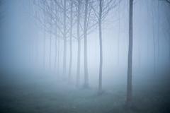 20190329 (Homemade) Tags: fog morning trees vivitar70210mmf35series1 grove wantage oxfordshire southoxfordshire valeofthewhitehorse