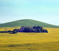 Beautiful Ruins (Robyn Hooz) Tags: marche loreto ruins colza alberi trees giallo verde natura nature hills