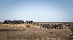 Boyela Waterhole (H1-6) (Sheldrickfalls) Tags: boyela boyelawaterhole h16 shingwedzi krugernationalpark kruger krugerpark limpopo southafrica zebra zebraherd burchellszebra plainszebra sebra elephant elephantbull elephantherd elephants olifant olifants waterhole