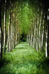 The end.. (Sir Willy) Tags: nikon d7200 tuscany viaggio dettagli tamron 18200 vr mano libera natura boschi alberi verde 1 maggio alternativo vietato dado william diodati photo prova