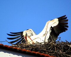 let me tell you 'bout the birds and the bees.... (lualba) Tags: storch stork nature natur roof dach himmel sky mertola portugal