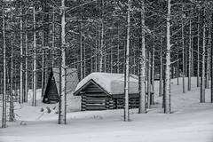 Finnland 2019 (Stefan Giese) Tags: nikon d750 finnland lappland 28300mm afs28300mmf3556 monochrome schwarzweiss sw bw hütte hut wald forest trees