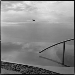 Infinity pool, with condor (ADMurr) Tags: california pacific pool rail bird hasselblad 80mm zeiss planar ilford film 6x6 square fullframe dba910