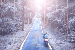 俺 の XSR900 - 60 (Cheng-Xun Yang) Tags: xsr xsr900 yamaha mtm850 バイク ヤマハ motorcycles