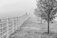 Foggy Morning in Kansas (dshoning) Tags: hff fence fog trees kansas morning april
