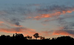 Lights and shadows (giuliaph.) Tags: matelica marche italia italy sunset tramonto trees alberi pink