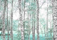 trees in the teal (Hal Halli....happy everything!!) Tags: trees baretrees autumn teal nature