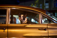 Pit Bull in the Window (coljacksg) Tags: pit bull terrier pontaic salem oregon pensive dog night vintage car canon fd 50mm f14